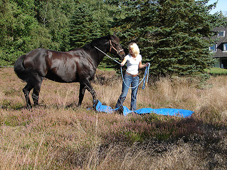 horse1-th.jpg