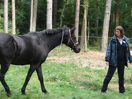 horse2-th.jpg