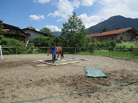 horse3-th.jpg
